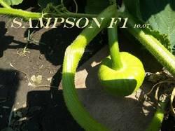 10 июля Sampson F1.jpg