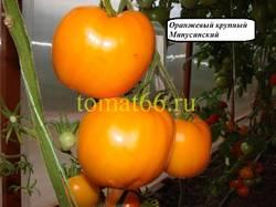Оранжевый крупный Минусинский.JPG