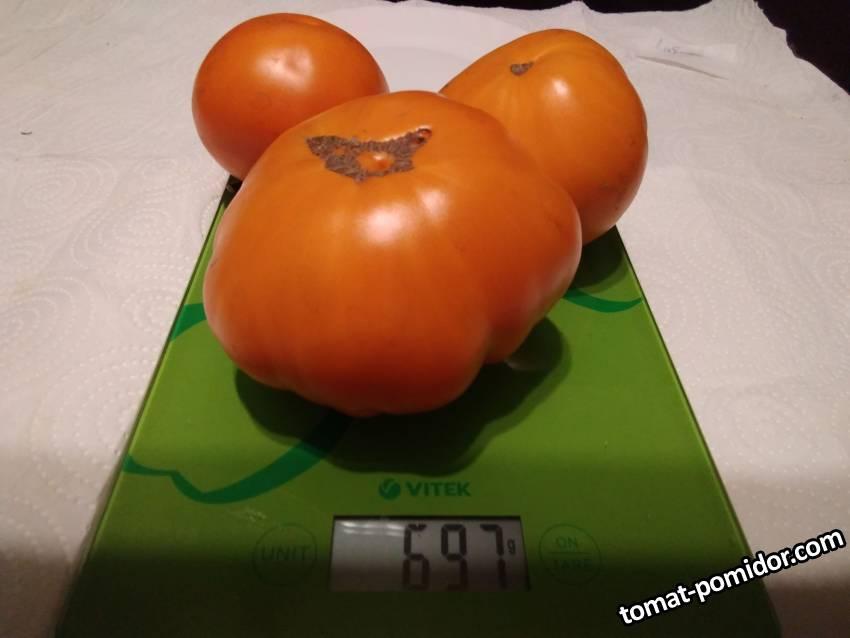 Летний абрикос