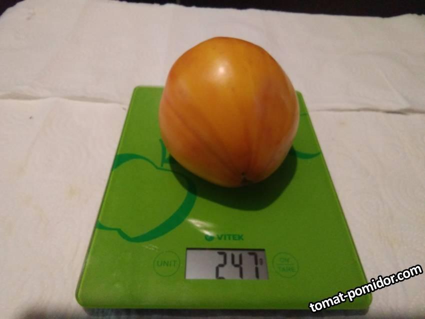 Сердце зебры( Heart of Zebre Apricot )