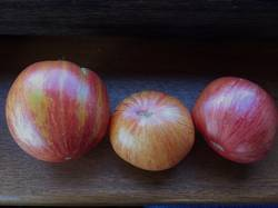 Не Блашики - крупн, жёлто-оранж, розово-красн