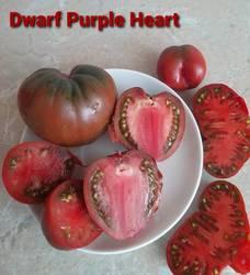 гном Пурпурное сердце2.jpg