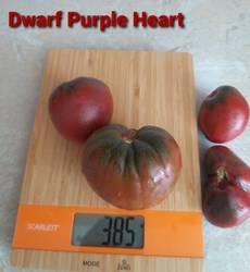 гном Пурпурное сердце1.jpg