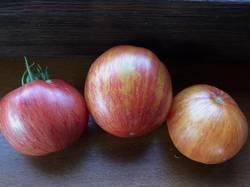 Не Блашики розово-красн : крупн : жёлто-оранж.JPG