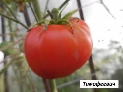 Тимофеевич