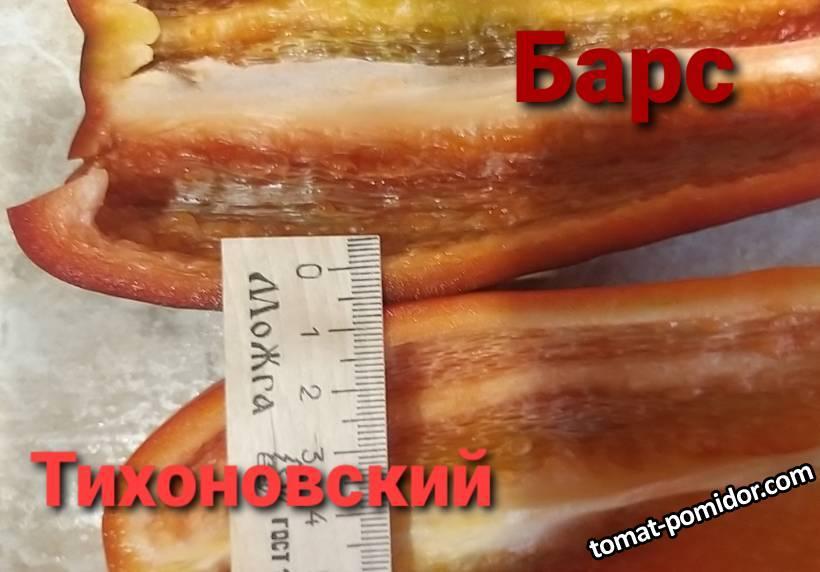 Барс Тихоновский разрез2.jpg