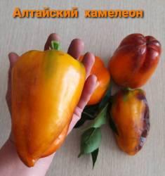 Алтайский хамелеон.jpg