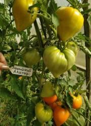 Заилийский Алатау оранж.jpg