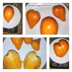 Оранжевое сердце Алматинское.jpg