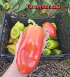 Тихоновский2.jpg