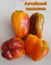 Алтайский хамелеон1.jpg