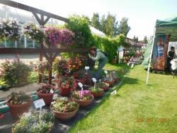 Стеллажи и вазоны с цветами
