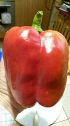 пересорт - самый крупный перец сезона!