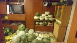 Дом, в котором живут тыквы