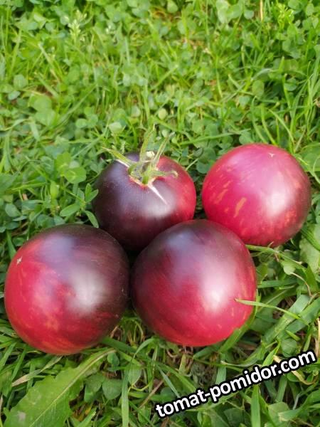 Золотое яблоко из Сан де Де Борегарда ( Pommed'or De Saint Jean De Beauregard,)