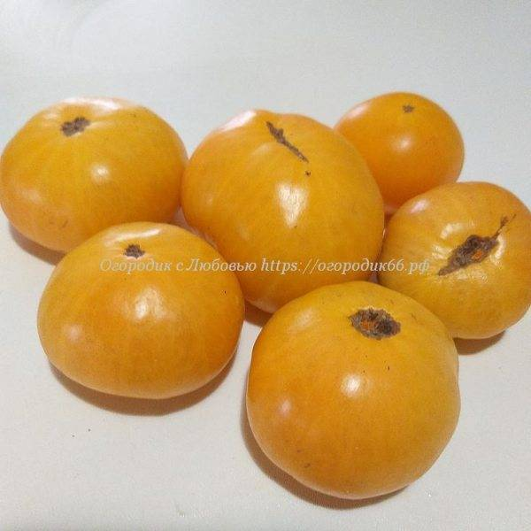 Оранжевый Крем (Dwarf Orange Cream ), Австралия - США