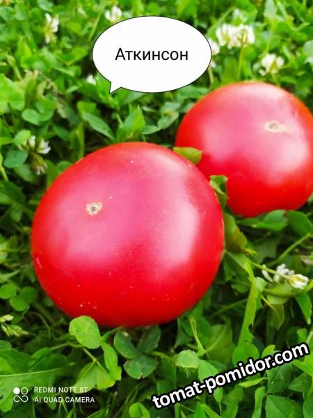 Atkinson Аткинсон