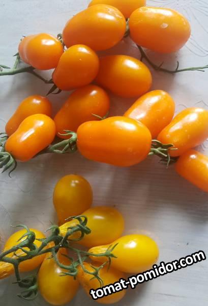 Грушевый апельсин и желтая груша (Yellow Pearshaped)