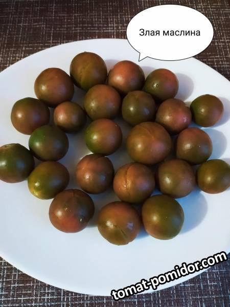 Evil Olive (Злая маслина)