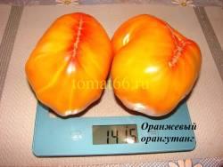Оранжевый орангутанг (5).JPG