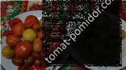 Мои помидорки на 04.01.16г (урожай 2015г)