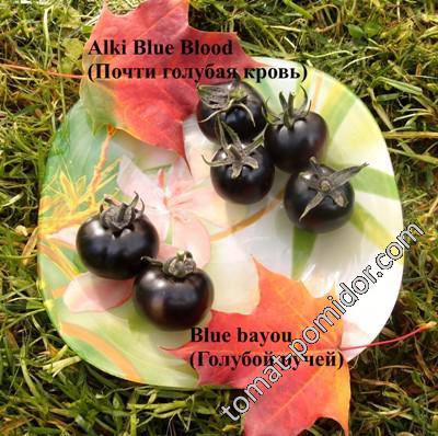 Alki Blue Blood (Почти голубая кровь), Blue bayou (Голубой ручей)