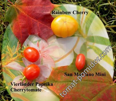 Rainbow Cherry,Vierländer Paprika Cherrytomate,San Marzano Mini
