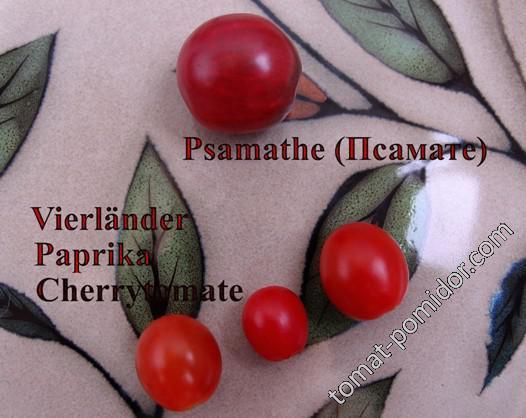 Vierländer Paprika Cherrytomate, Psamathe
