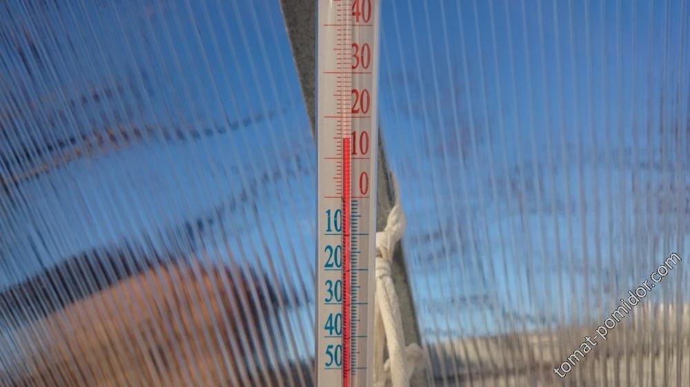 В теплице +15*С (18.02.16г.)