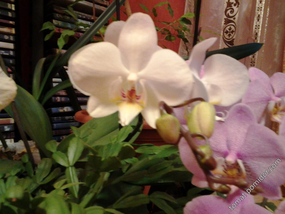 еще орхидеи