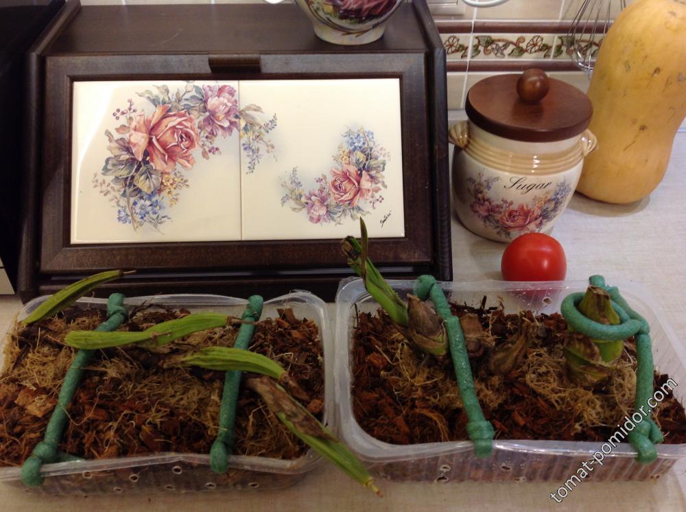 Орхидеи из Вьетнама