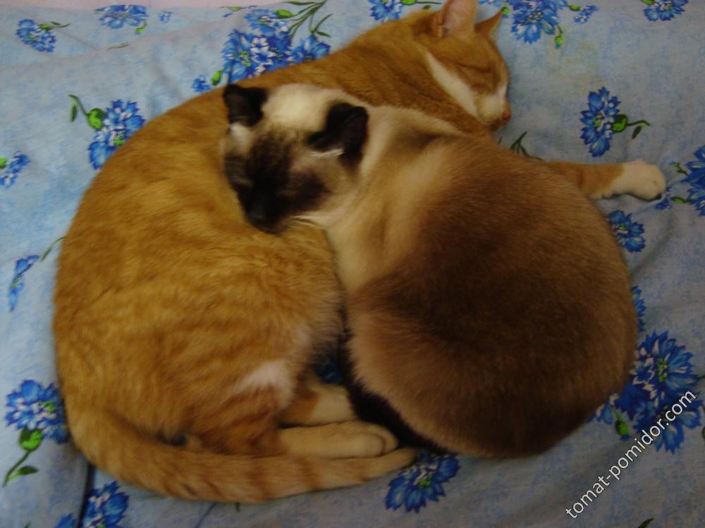 Спят Маня и Рыжик