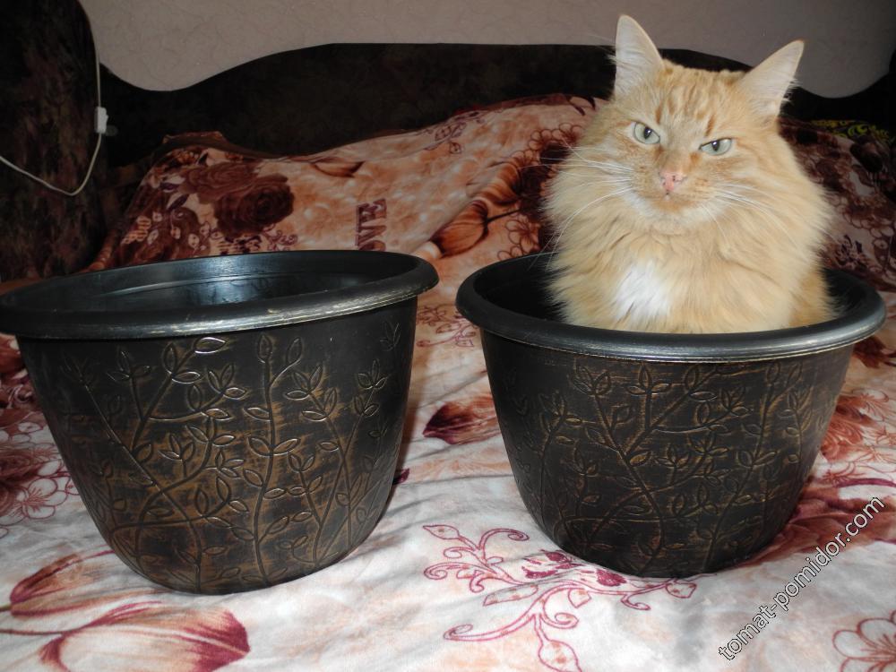 Объем горшка-один кот:)