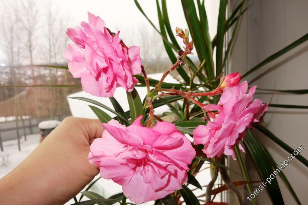 У цветов весна