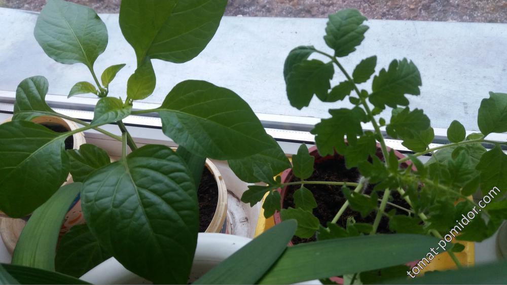 будущий ранний урожай