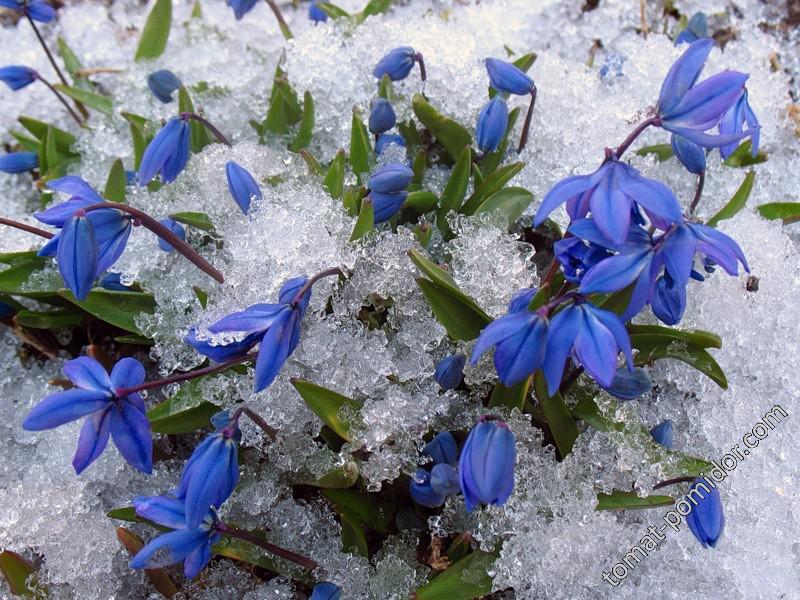 весна пришла...