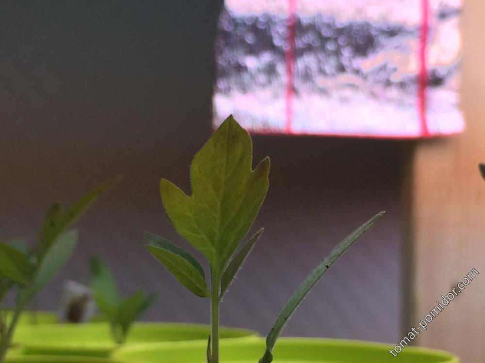 темнеет лист
