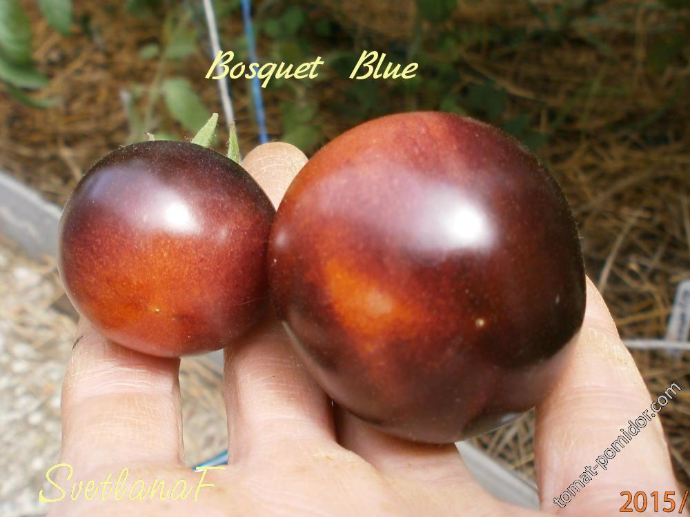 Bosque Blue