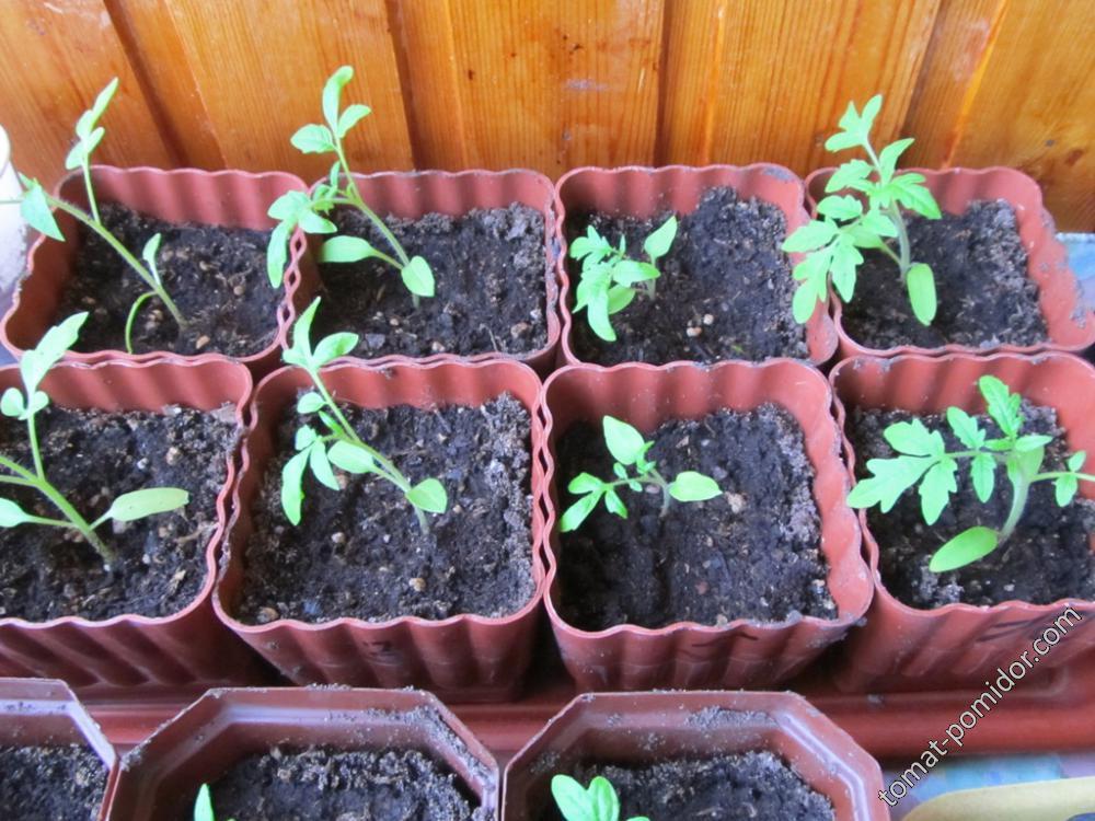 Распикированные помидоры