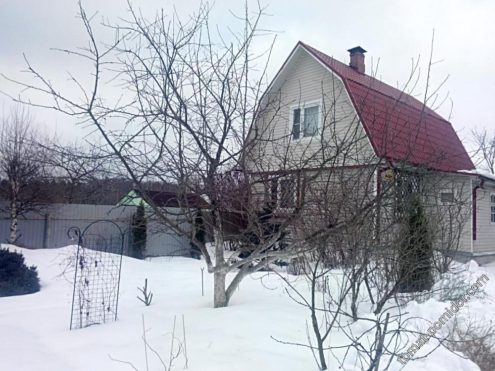 Обрезка Антоновка