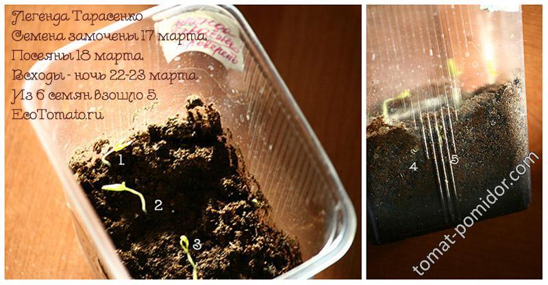 Легенда Тарасенко (семена 15 г) из замоченных семян