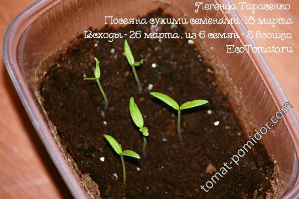 Легенда Тарасенко(семена 15 г) посеяна сухими