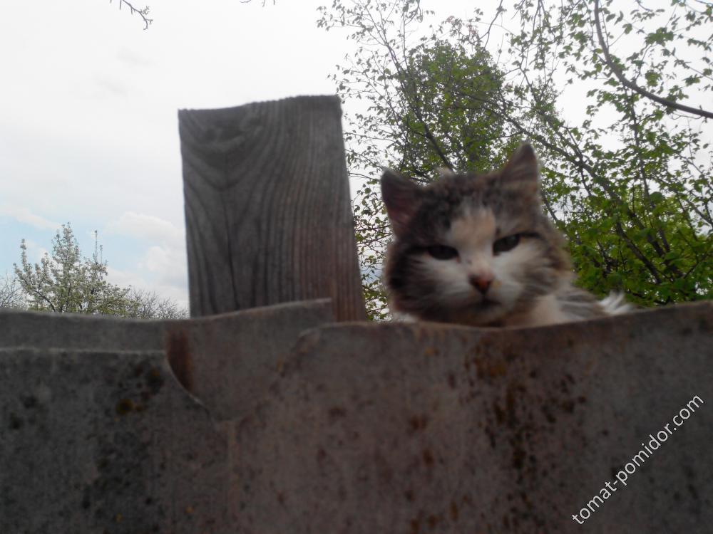 Кот-разведчик