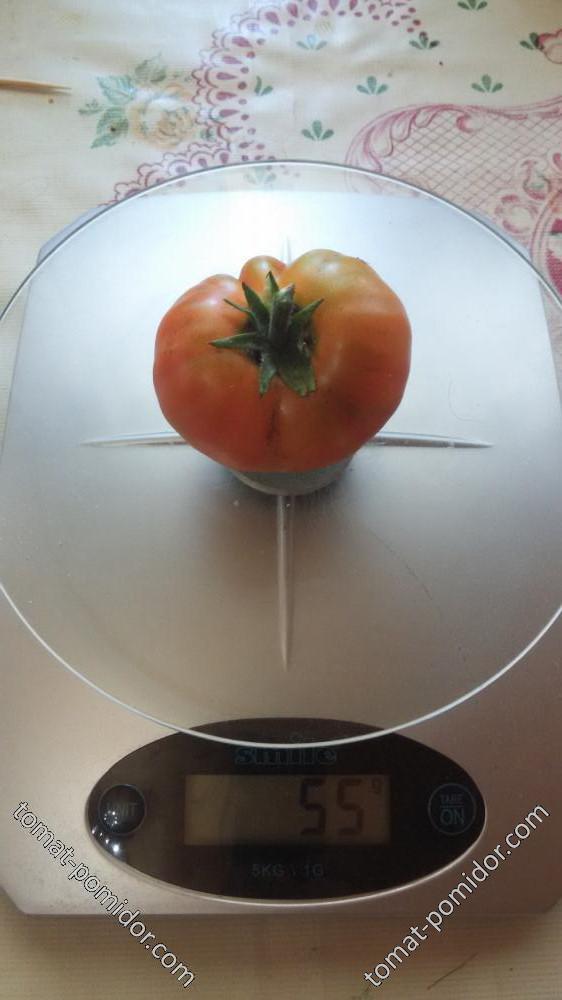 25.06 Первый томат Июньский