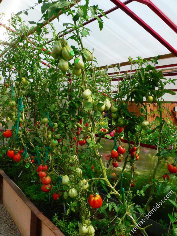 Конвейер для томатов в белгороде транспортер фольксваген