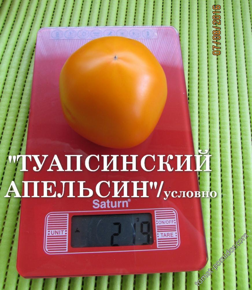 """Томат """"Туапсинский апельсин""""/условно"""