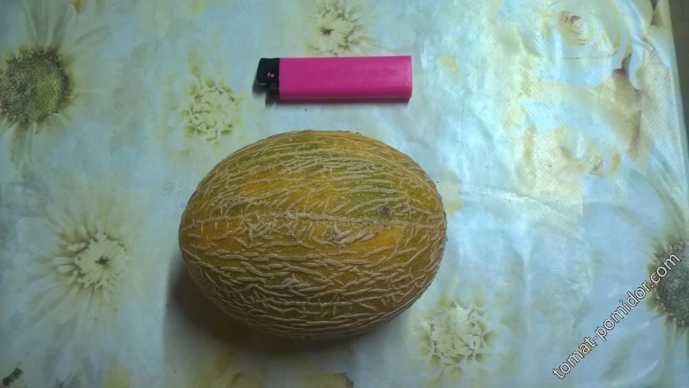 Дынька (Апельсиновая-Биотехника)