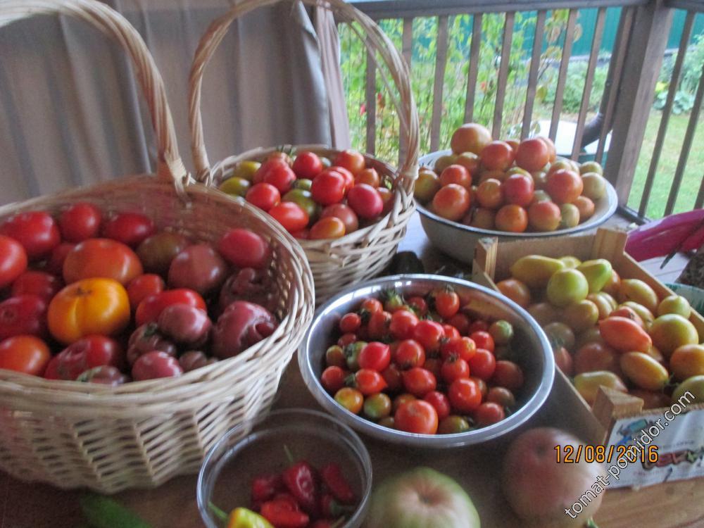 сбор урожая в один из выходных