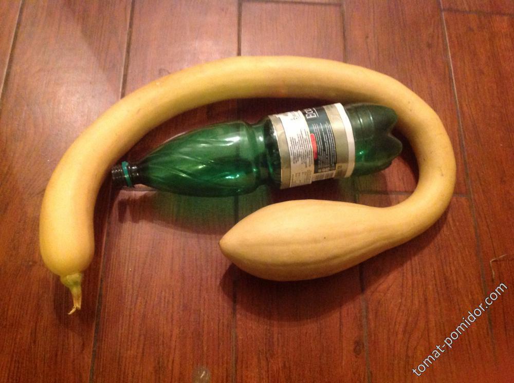 Zucchino Rampicante Squash