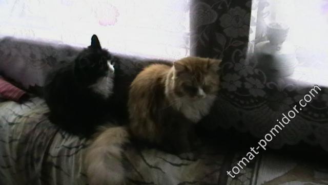 Муся и Ася